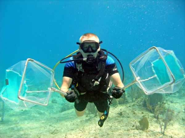 Top 10 tips for how to catch lionfish with nets.