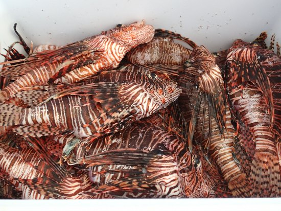 Top 15 lionfish hunting tips