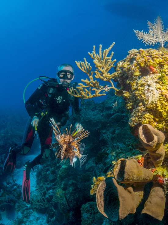 Lionfish on spear