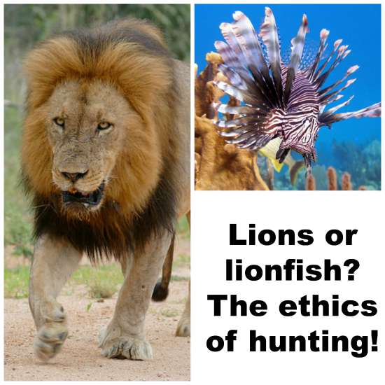 Lions or lionfish